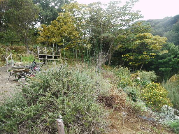 すこしずつ木々の葉も色つき始めたハーブ園の秋