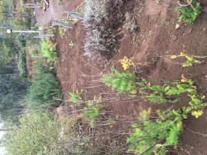 花壇⑤の土を搬入した東側の花壇